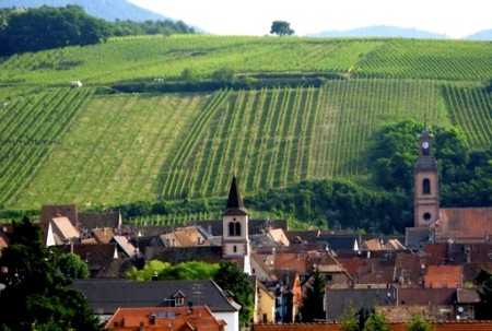 Boxler vineyards