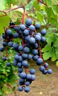 Tom Maresca | Tom's Wine Line | Page 5