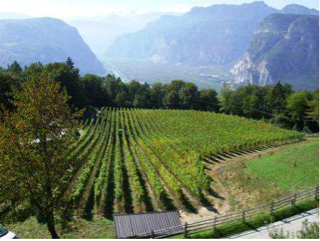 zemmer vineyard