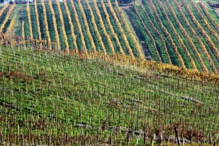 Greco di Tufo vineyards at di Marzo estate