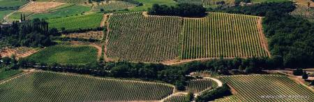 Altesino Vineyards