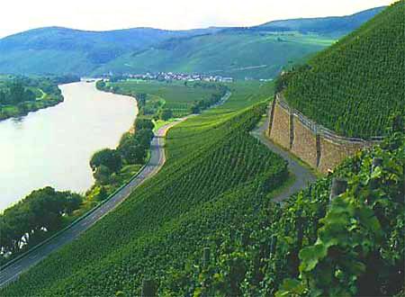 Brauneberger vineyard