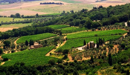 Fuligni Vineyards