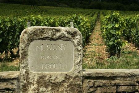 drouhin-vineyard