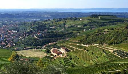 Valpolicella vineyards